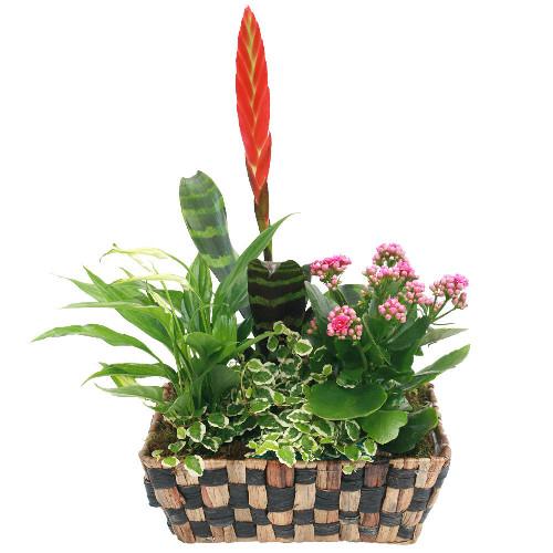 Livraison de fleurs bromelia for Livraison de fleurs demain