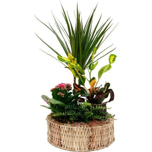 И комнатные растения фото большие